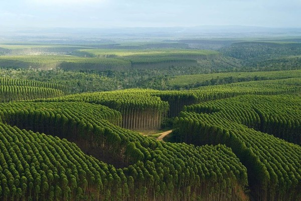 Entenda: Madeira de reflorestamento para móveis